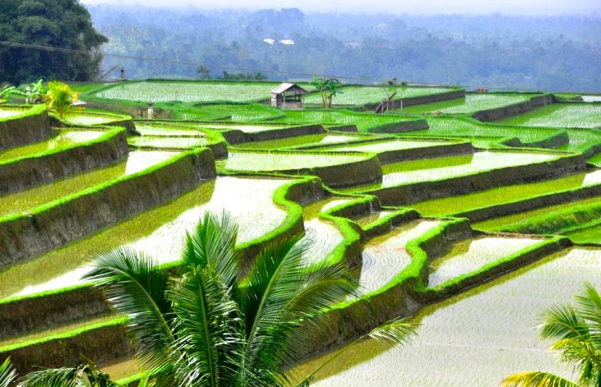 bali-rice-fields
