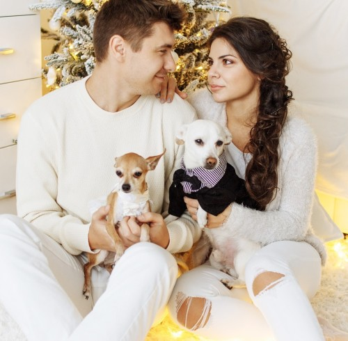 canine-christmas-couple-326602
